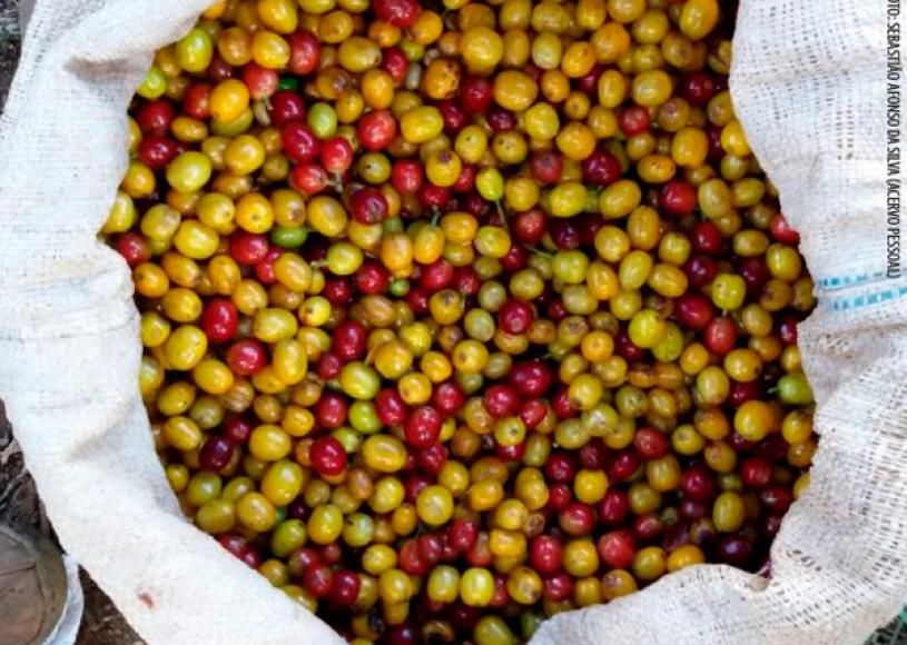 Produtor rural vende saca de café por R$ 9 mil