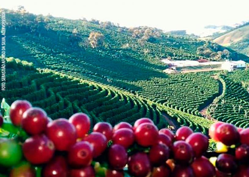 Café arábica atinge 23% do Valor Bruto da Produção