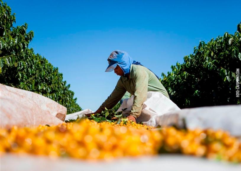 Escolaridade influencia salário da mulher no agronegócio