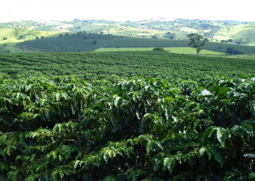 Cientistas testam drones para proteger plantas de café de doenças fúngicas