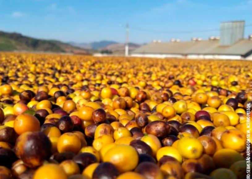 Safra mundial de café foi estimada em 168 milhões de sacas no ano-cafeeiro 2018-2019