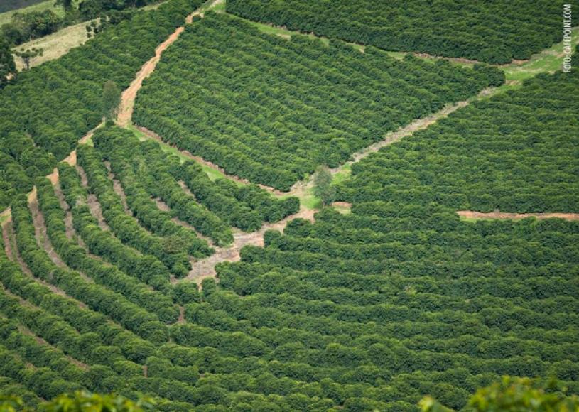Preços de fertilizantes devem voltar a subir com demanda para safra