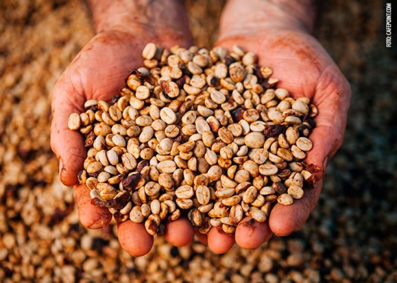 Brasil bate recorde mensal de exportações de café
